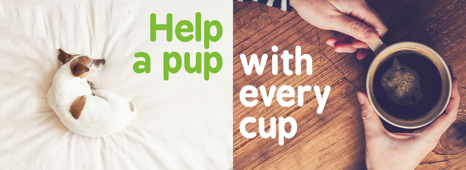 split image with a Dog on the bed and two holds holding the cup of coffee